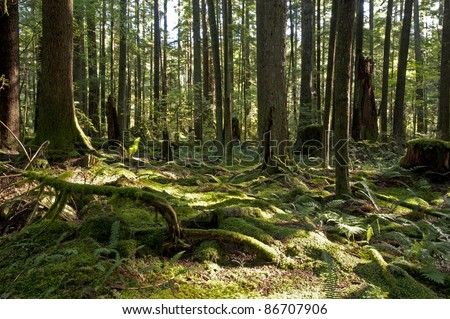 Green forest with trees and bush