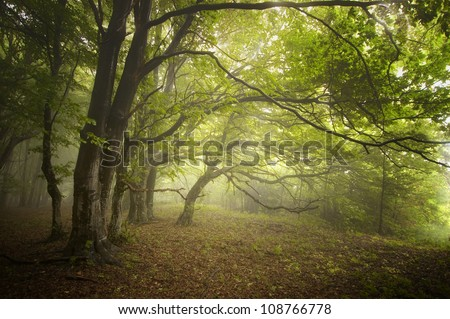 green forest with twisted trees - stock photo