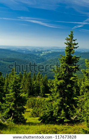 green forrest - stock photo