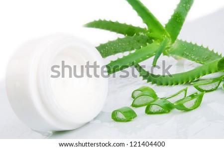 Green fresh aloe vera leaves - stock photo