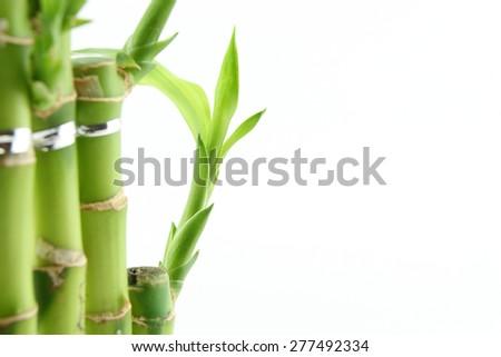 Green fresh bamboo isolated on white background  - stock photo