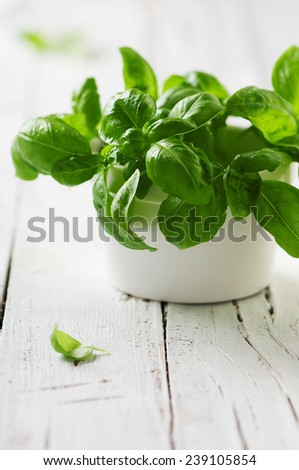 Green fresh basil on the wooden table, selective focus - stock photo
