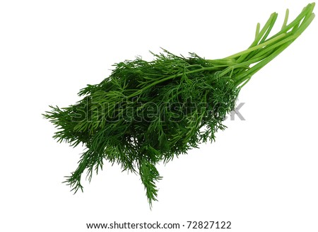Green fresh dill isolated on white background