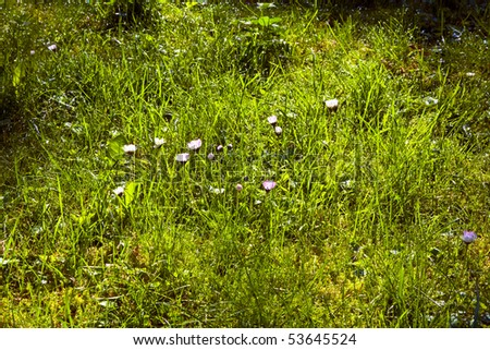 green fresh grass in wonderful morning light - stock photo