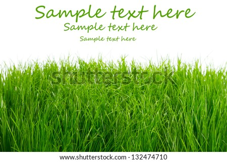 Green fresh grass over white background