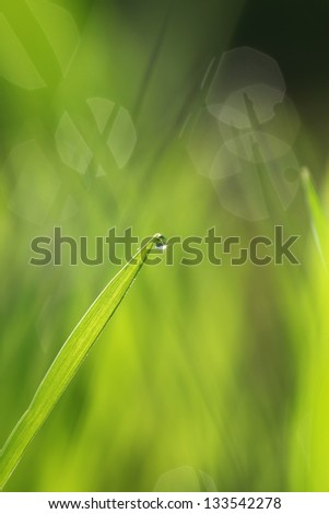Green fresh grass with water drops, dew