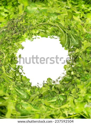 Green fresh herbs frame on white background - stock photo