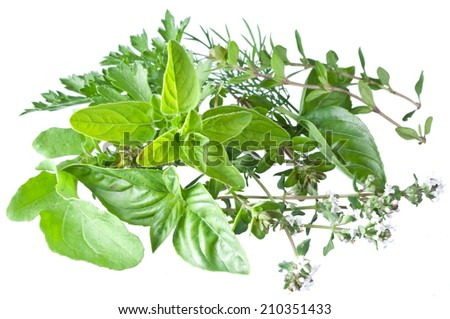 Green fresh herbs  isolated on a white background.