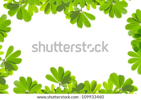 green fresh leaves frame isolated on white background - stock photo