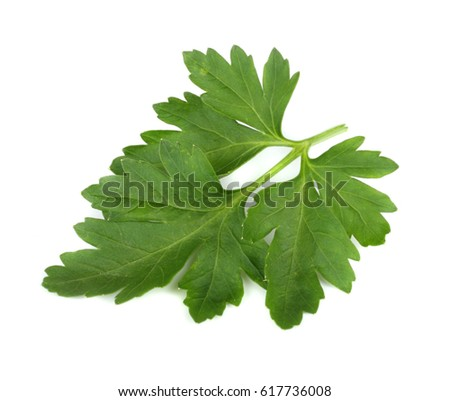 green fresh parsley leaf isolated on white background