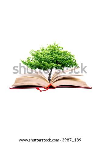 Green fresh tree in the big book - stock photo