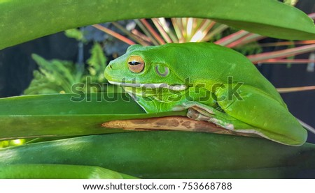 green frog camouflaged in garden plants