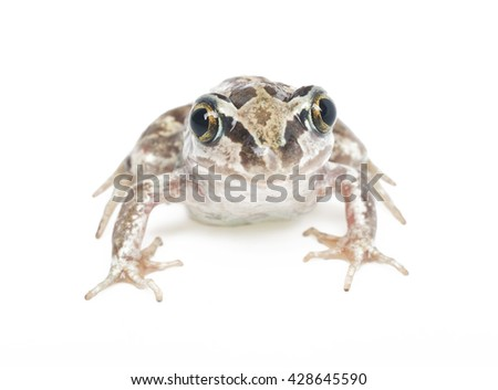 green frog close-up on a white background - stock photo