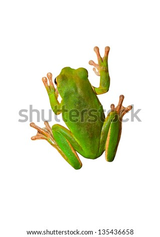 Green frog isolated on white - stock photo