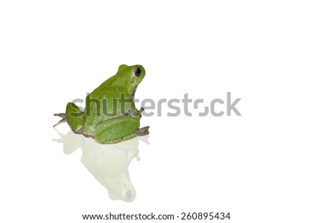 green frog isolated on white background - stock photo