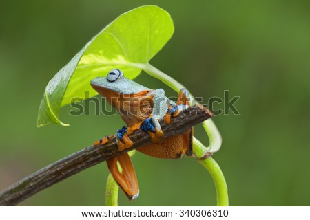 green frog on a branch under umbrella leaf. photography - stock photo