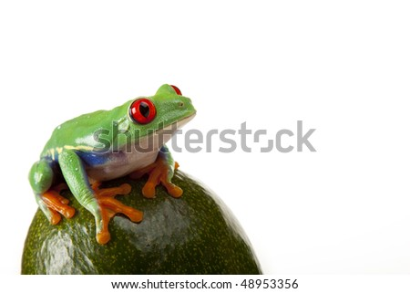 Green frog on fruit - stock photo