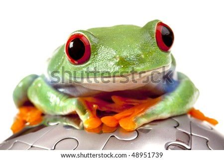 Green frog on puzzle