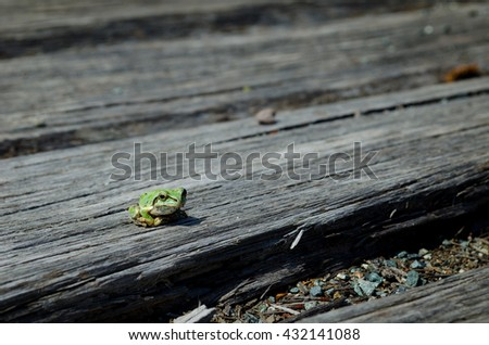 Green Frog on the wood - stock photo