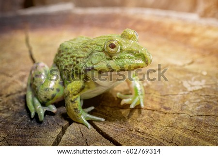 Green frog sitting on a tree stump