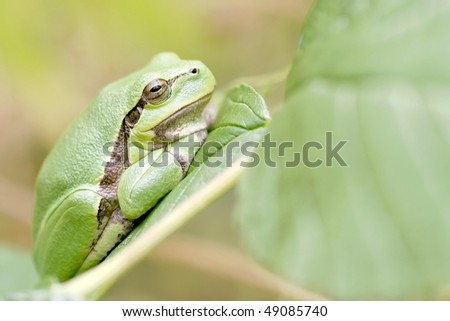 Green frog sitting on leaf in the forest.