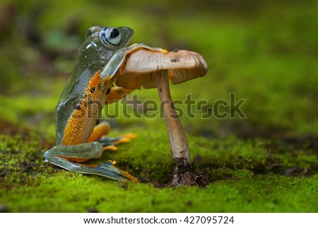 green frog standing and holding a mushroom. photography - stock photo