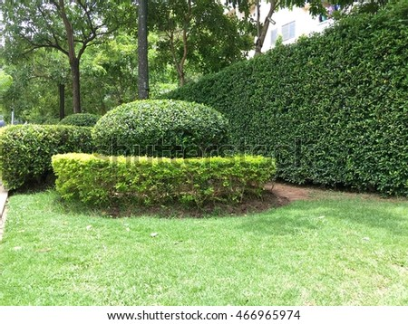green garden and tree
