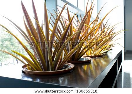 green garden plant indoor outdoor - stock photo
