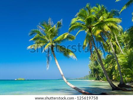 Green Getaway Coconut Coast - stock photo