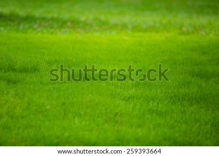 green glass background. - stock photo