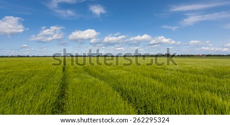 Green Grain Field with Beautiful Summer Sky - stock photo