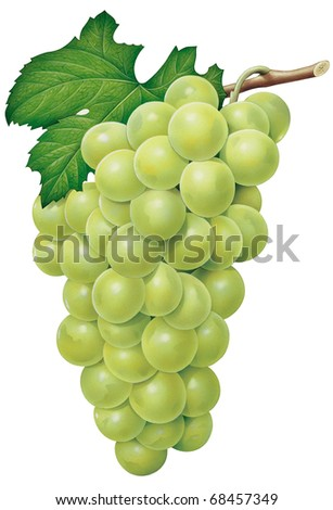 Green Grape - stock photo
