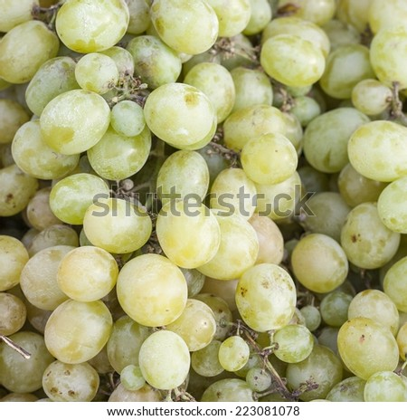 Green grapes for sale on the sun light - stock photo