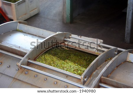 Green grapes in the wine press where the juice will be pressed leaving the skins and seeds behind - stock photo