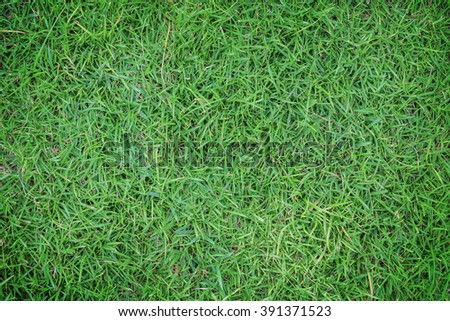 Green grass abstract