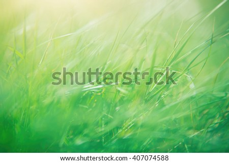 Green grass abstract background, spring sunny day, beautiful natural wallpaper, macro photography, shallow depth of field - stock photo