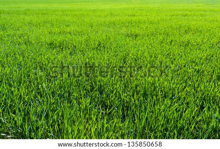 Green grass abstract texture background