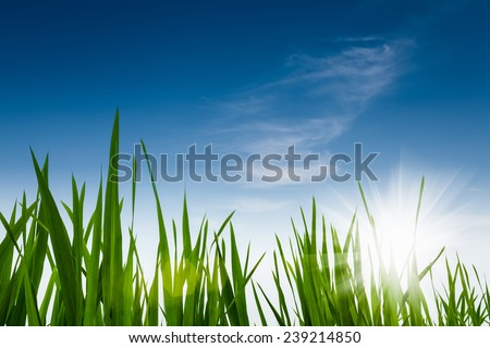 green grass against a blue sky , nature environmental background  - stock photo
