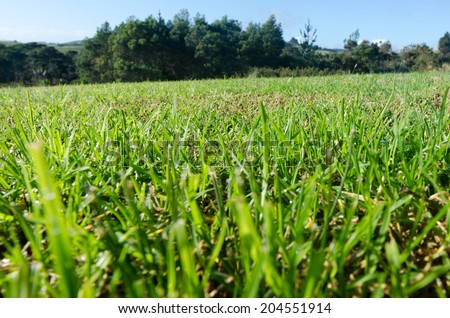 Green grass against blue sky background.concept image of make your house - stock photo