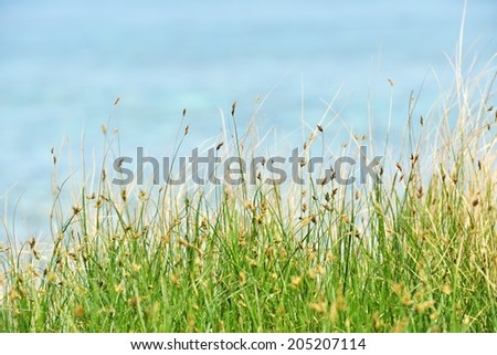Green grass against the sea. Focus on the grass - stock photo