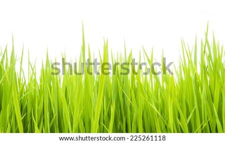 Green grass against white background. Sunlight. - stock photo