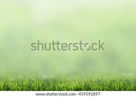 Green grass and abstract blurred for background.