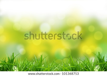 Green  grass and background. A beautiful multicoloured background