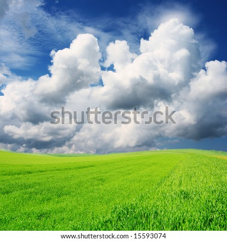 Green grass and beautiful sky