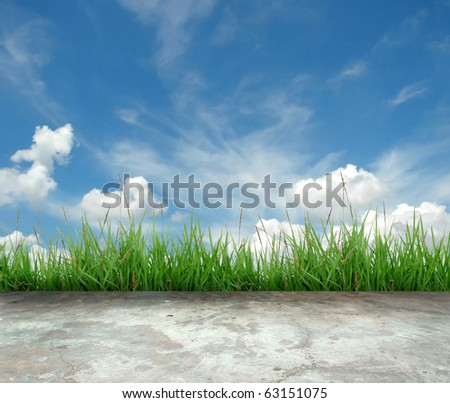 green grass and blue sky - stock photo