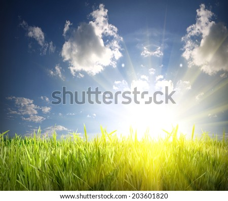 green grass and blue sky over the sun rise - stock photo
