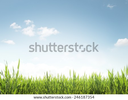 Green grass and blue sky texture. - stock photo