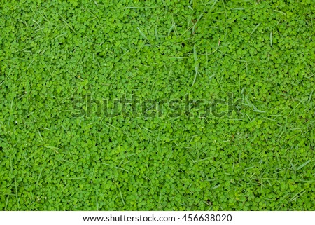 Green grass and Cement floor background, Texture, two tone - stock photo