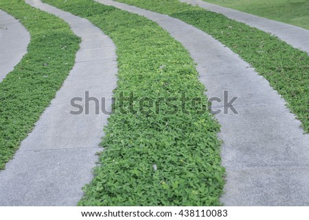 Green grass and cement striped walkway.