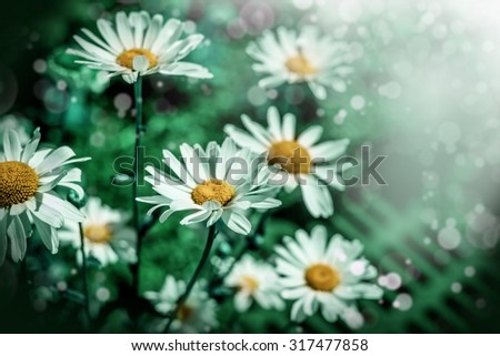 Green grass and chamomile flowers in the nature, meadow of flowers, spring floral landscape.